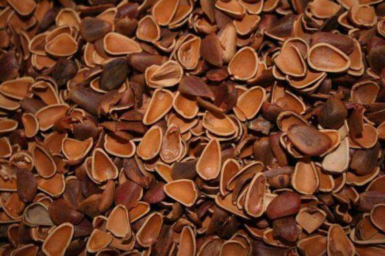 Отвар скорлупы кедровых орехов