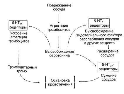 схема серотонин