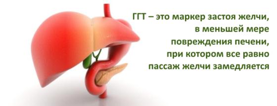 Ггт в биохимическом анализе крови лечение thumbnail