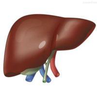 АЛТ в анализе крови на биохимию: что это такое и почему повышен