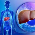 Ферменты АЛТ и АСТ в анализе крови